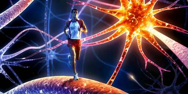 Factores internos que afectan el crecimiento celular