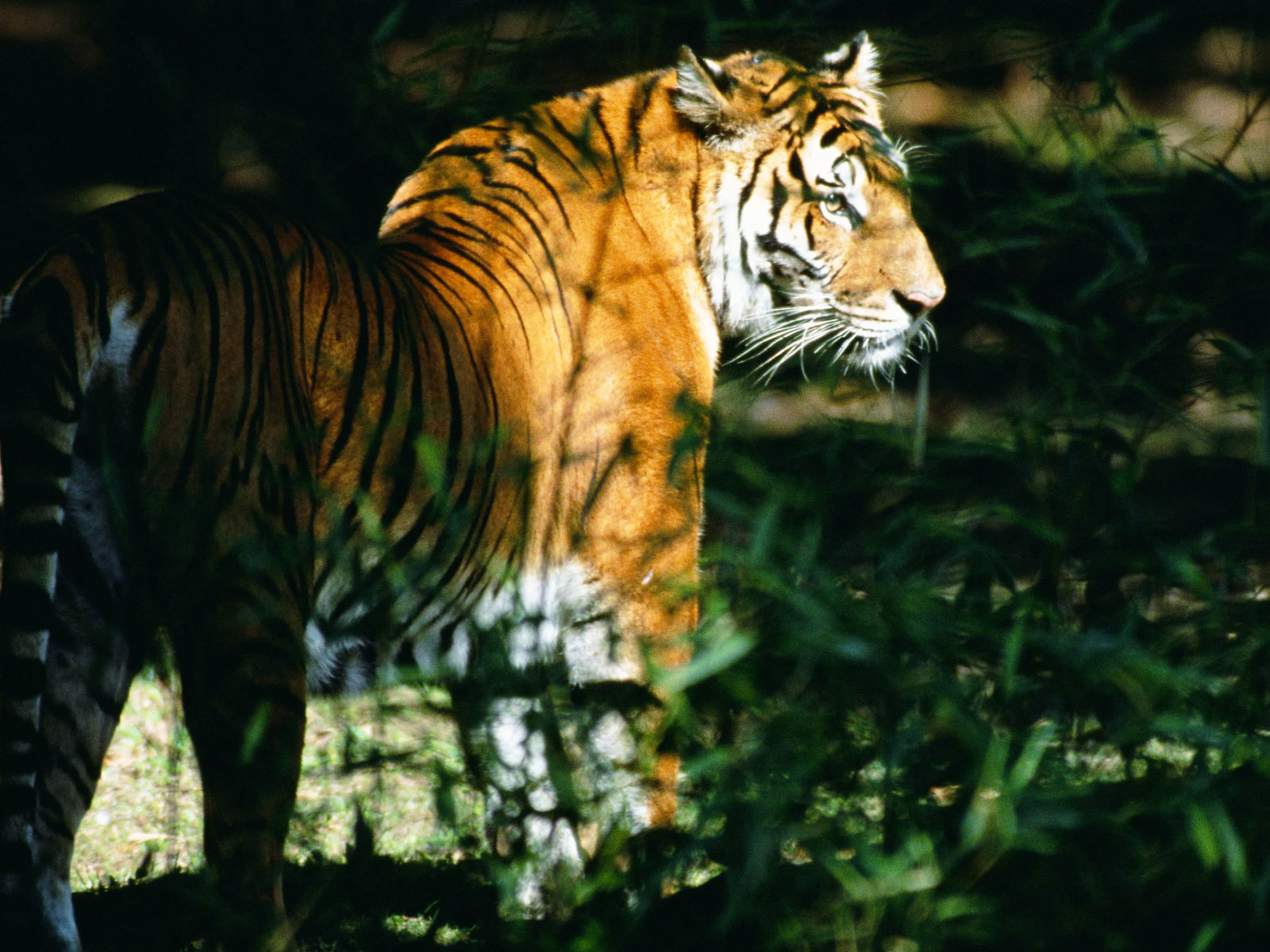 Wild Animals Names: HD Animals Wallpapers 5