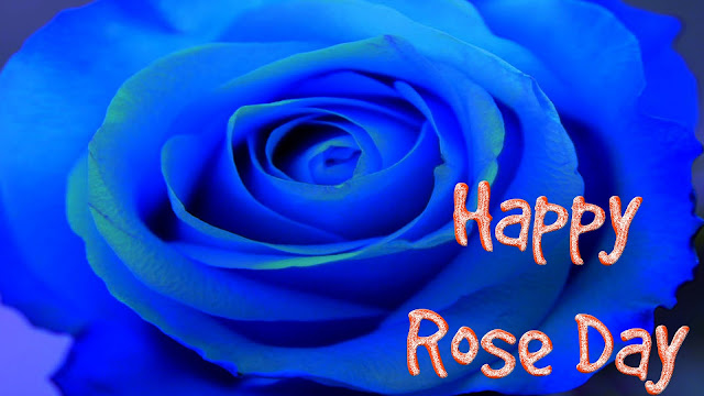 Lovely-blue-rose-wallpaper-for-free
