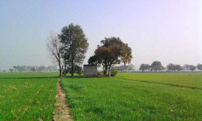 Image result for kanak khet