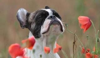 animal  Alergias em Cães Sintomas e Tratamento