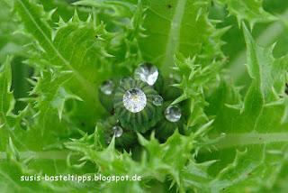 Brillanten der Natur: Tautropfen, Foto von Susanne McDonald, unabh. Stampin Up Demonstratorin