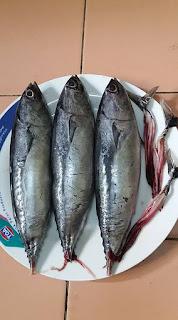 Tips Buang Bisa Ikan Tongkol