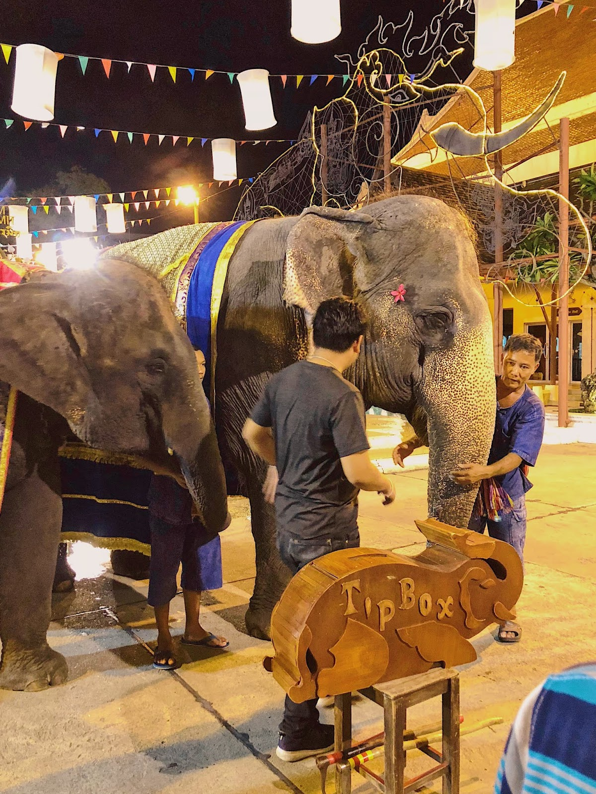 Elephant performers at Siam Niramit Bangkok