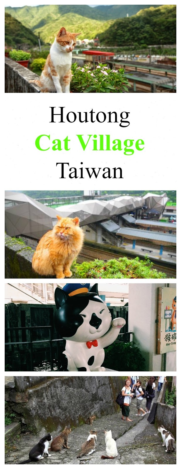 cat village cats houtong taiwan