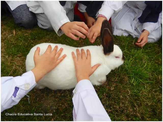 Aprendiendo sobre los conejos - Chacra Educativa Santa Lucía