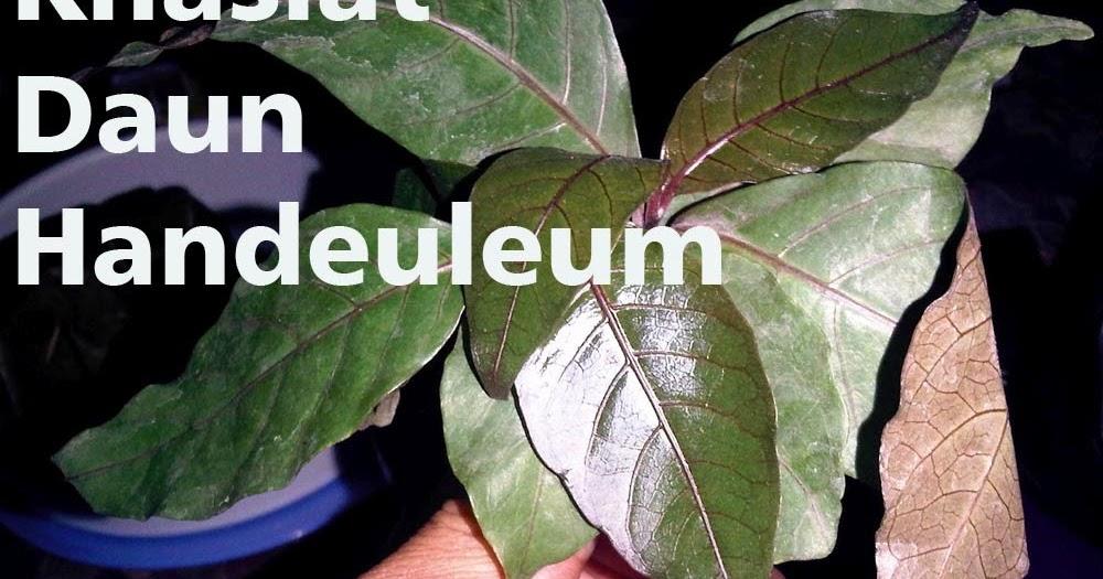 Obat Pelangsing Body Slim Herbal (BSH) Asli Kemasan Terbaru