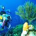 Menikmati Keindahan Bawah Laut di Pantai Sadranan Gunung Kidul