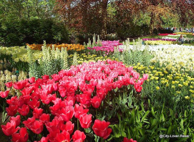 Europas vackraste trädgårdar - Keukenhof