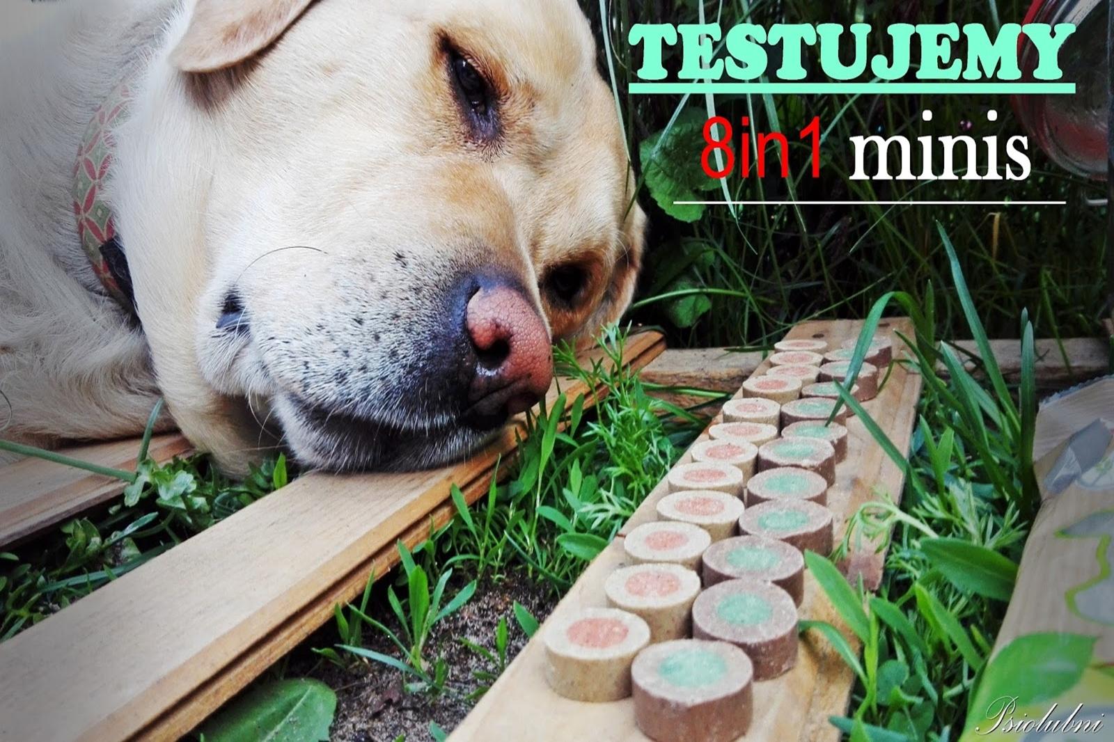 8in1, 8in1 minis, recenzja, test, recenzja przysmaków, przysmaki dla psa, top for dog, psiolubni,