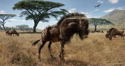 Ancient wildebeest-like animal shared 'bizarre' feature with dinosaur
