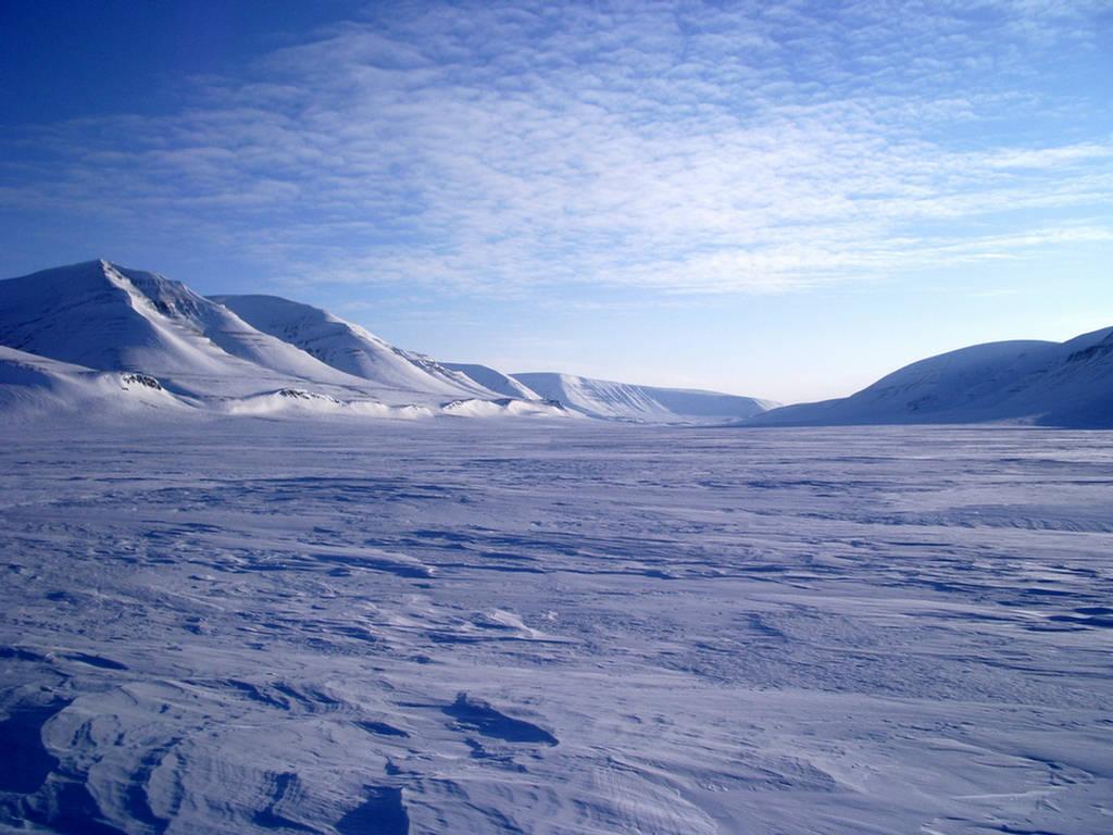 Genesis Nature Blog: Arctic and Antarctic Habitats
