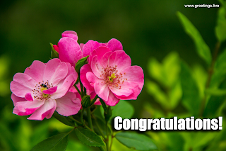 congratulations images greetings
