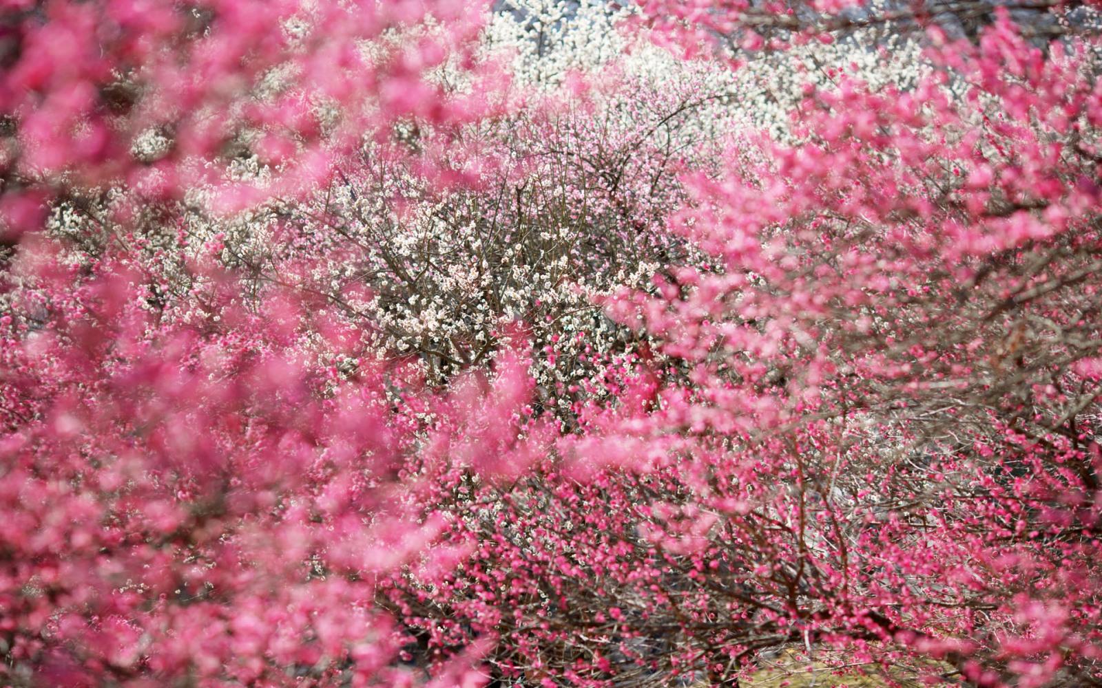 imagenes de flores bonitas gratis