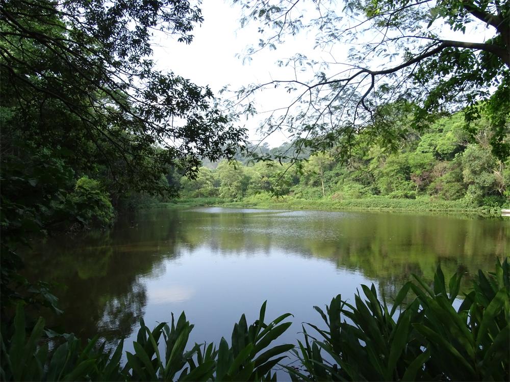 """Parte da mata do Parque Estadual do Jaraguá (PEJ) por onde escoa o Ribeirão das Lavras, um rio que nasce no """"coração"""" do Pico do Jaraguá"""