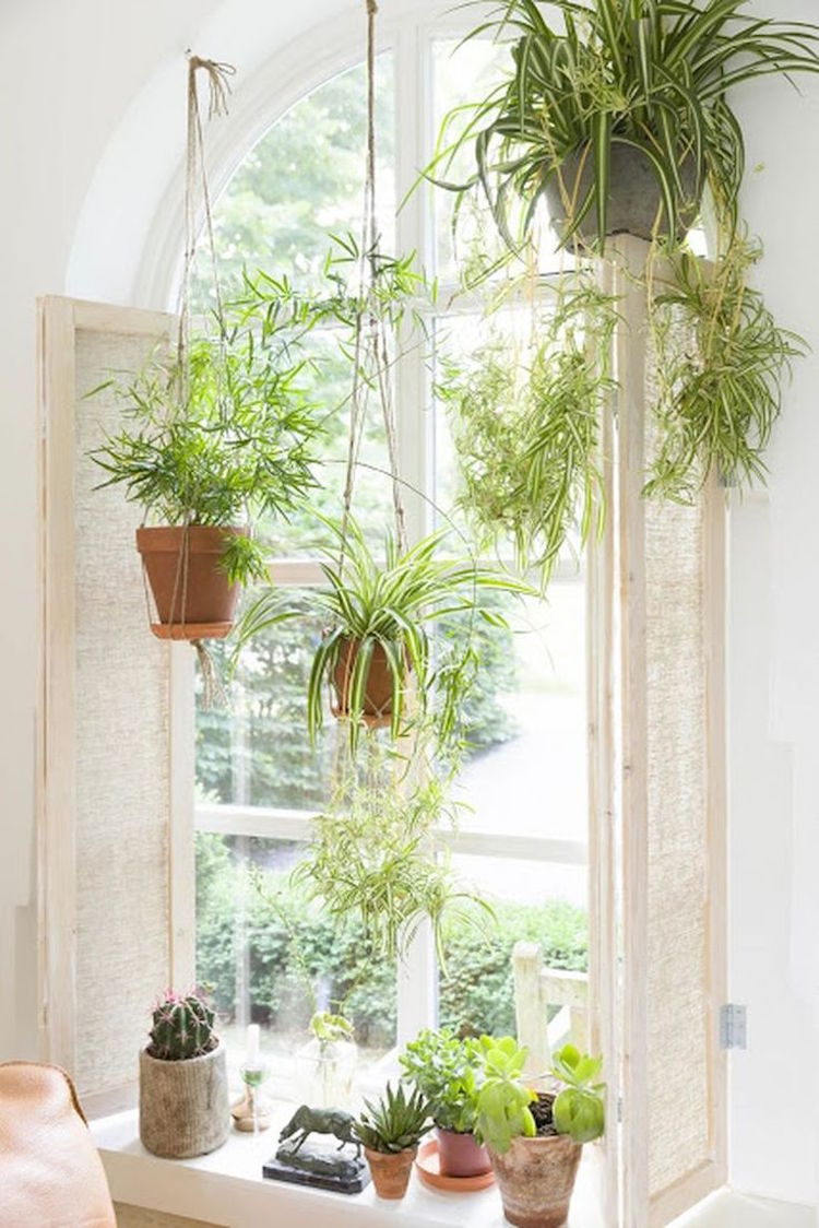 My Scandinavian Home The Ultimate Guide To Indoor Hanging Plants