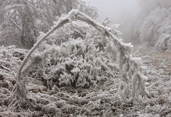 Freezing Fog Blankets Forest and Creates Surreal Frozen Landscape