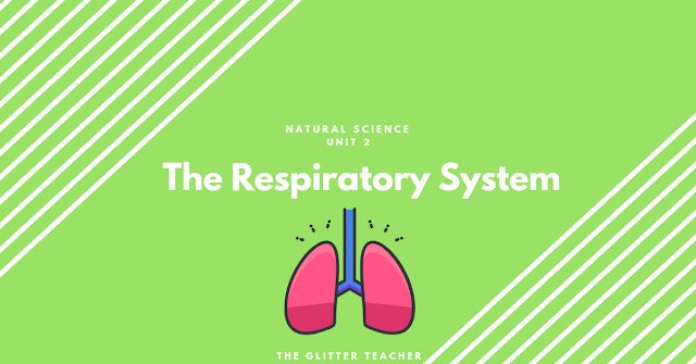 The respiratory system. Unit 2 Natural Sciences year 6
