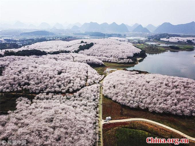 Hòn đảo hoa anh đào 'đẹp rụng rời' ở Trung Quốc - Ảnh 11