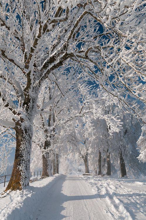 image result for winter wonderland white trees blue sky