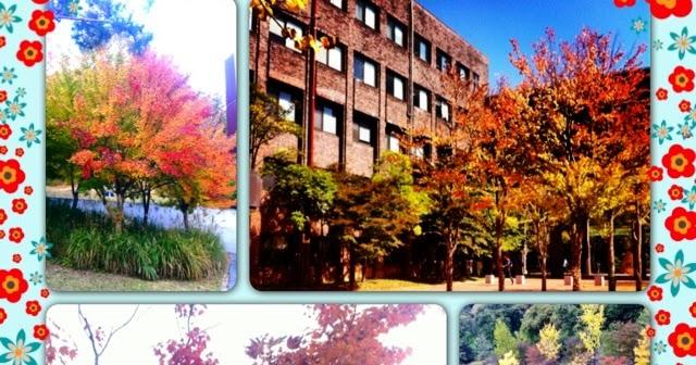 Elaine 링 S 세계 Autmn Scenery In South Korea Exclusive Topic