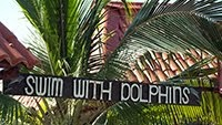 SWIM WITH DOLPHINS VARADERO