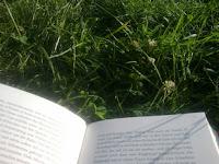 Buch und Wiese