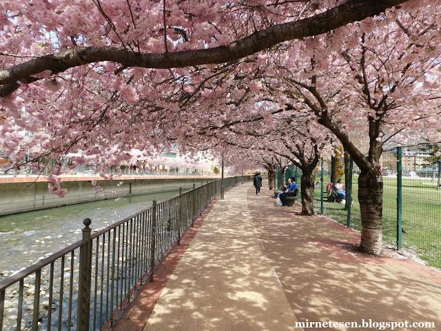 Андорра-ла-Велья весной