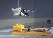 Kisah Inspirasi - Jebakan Tikus