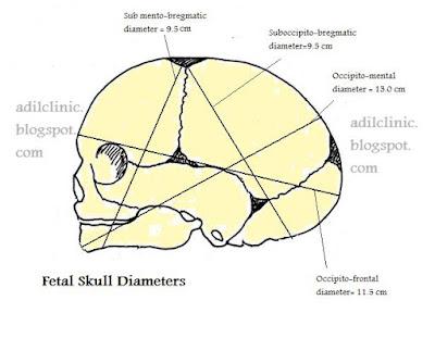"""fetal-skull-diameters-image"""""""
