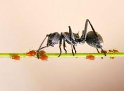 metamorphosis: Macam-macam Simbiosis dan Contohnya