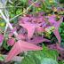 Piante e fiori bizzarri - 2