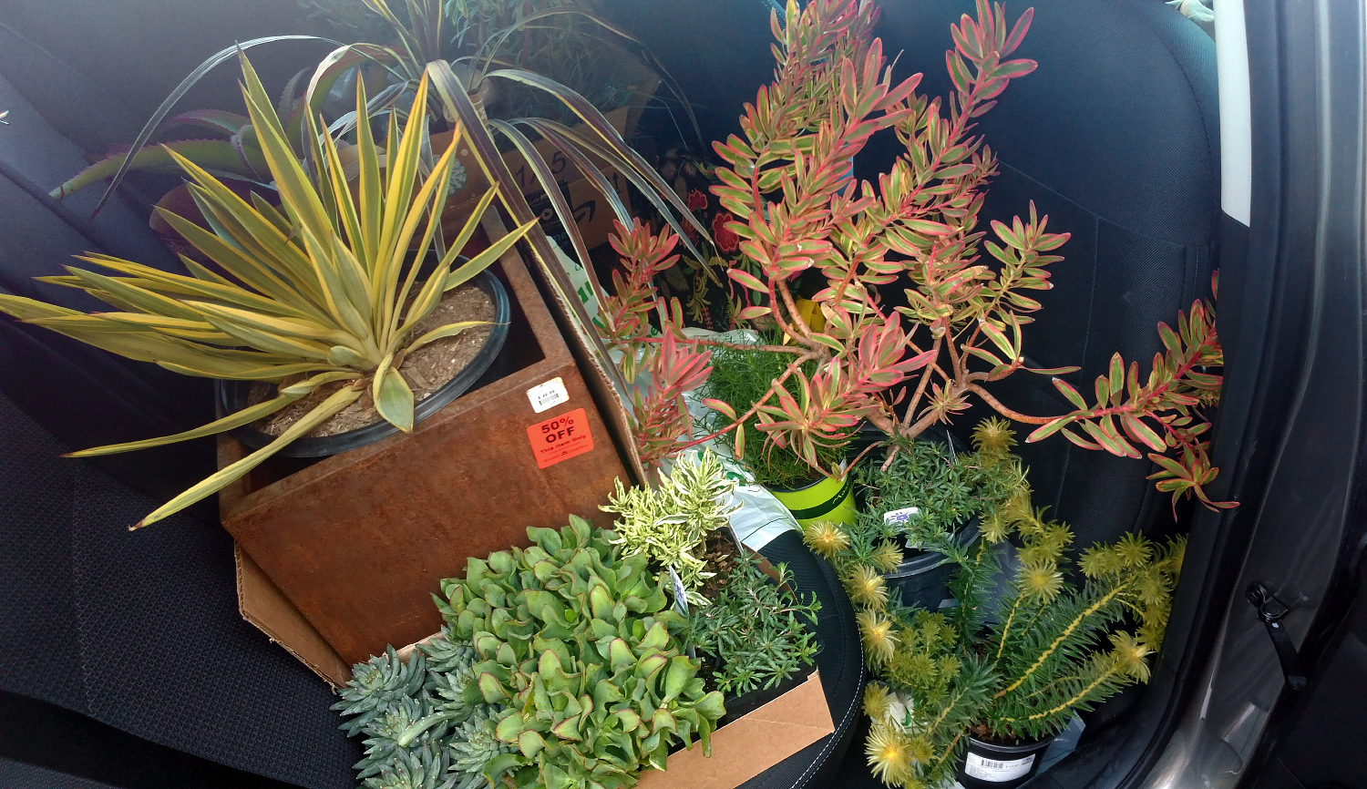 Succulents and More: Of course I\'m buying plants on my trip!