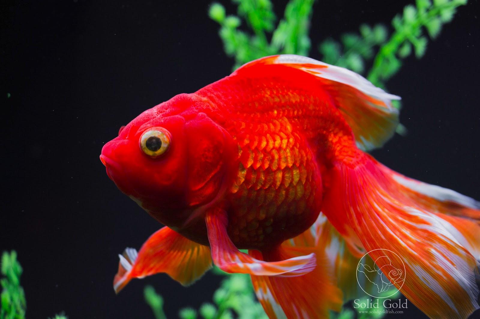 Goldfish Care Basics