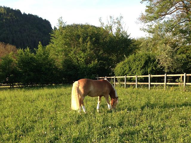 Feeding: Keeping Your Horse Healthy