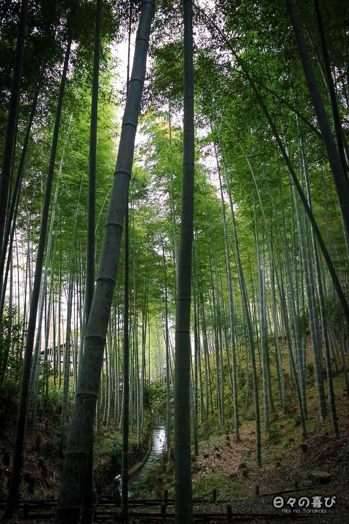 Bambouseraie d'Arashiyama, Kyoto