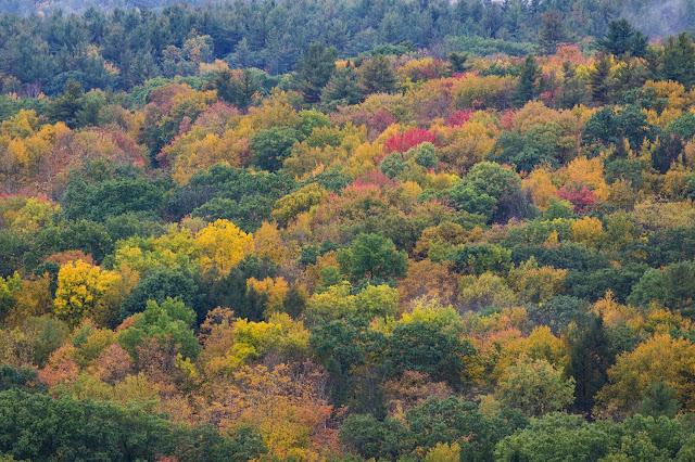 Foliage-Sherlbourne falls