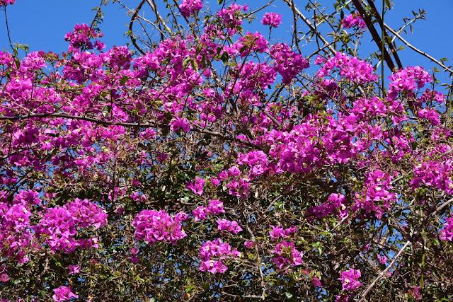 Alameda Apocada Gardens Cadiz