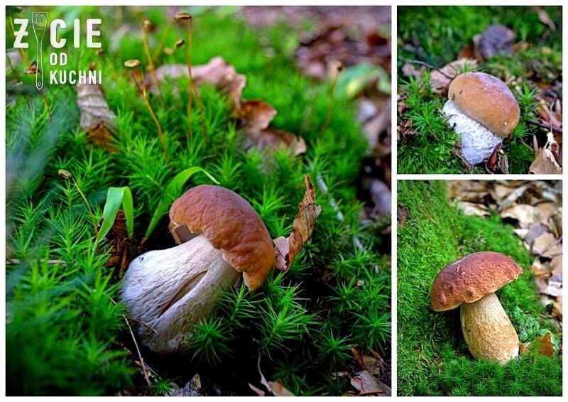 prawdziwki, grzyby lesne, las, grzybobranie, na grzyby, risotto, risotto z grzybami lesnymi, zycie od kuchni
