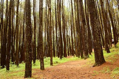 Hutan Pinus Mangunan - Paket Tour Yogyakarta Periode Lebaran 2018 - Salika Travel