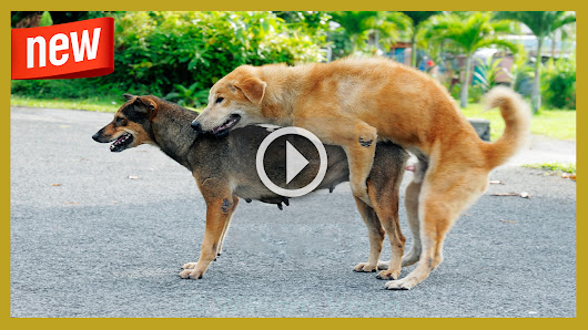 Video Of Dogs Mating