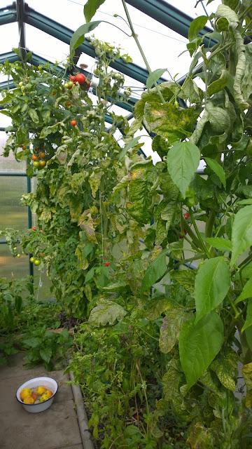 fressen rehe geranien