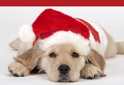 cute christmas puppies | Awesome Wallpapers  |Cute Christmas Dog