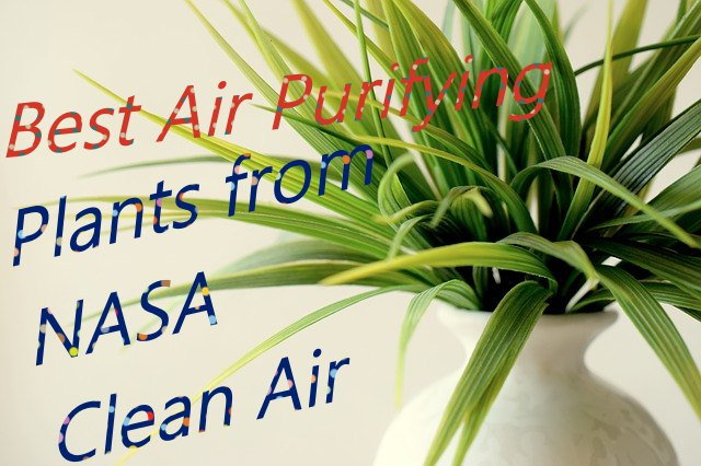 Top 6 air purifying plants NASA : GARDEN