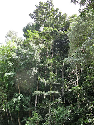 Rainforest trees grows to between 40 to 80 meters tall