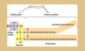 Química 1 Lípidos Estructura Clasificación