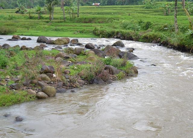 Image Result For Wisata Nanas Subang