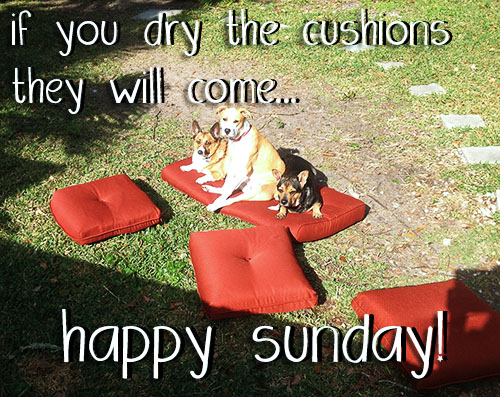 The Dog Mom: Happy Sunday