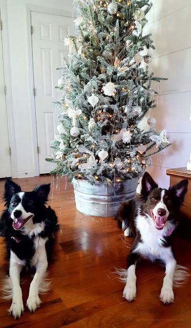 Christmas, Border Collies, Flocked Tree, Farmhouse, Cottage, Decorating,