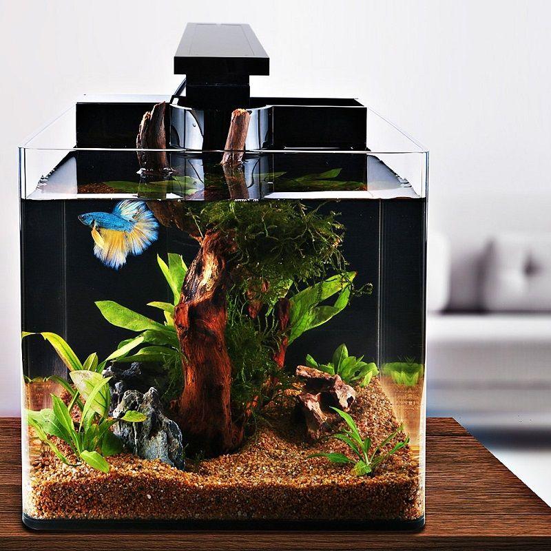 Image Betta Fish Tank Amazon